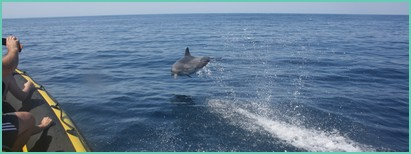 dolphins and caves tour