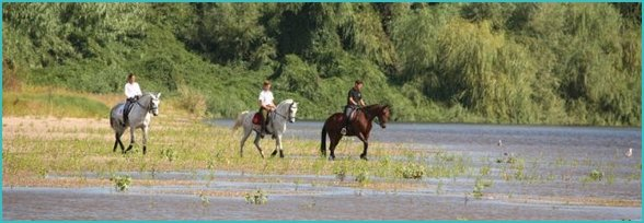 Image result for horse riding in algarve portugal sport and adventure