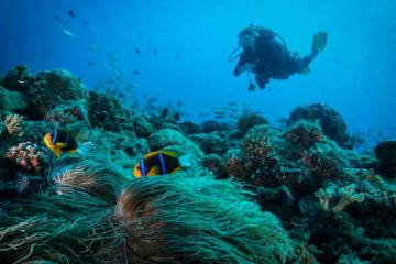 scuba diving azores