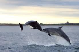 algarve albufeira dolphin tours