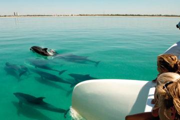lisbon setubal dolphin tour
