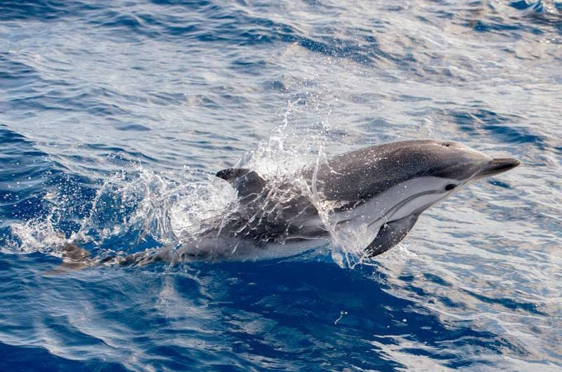 madeira dolphin and whale watching